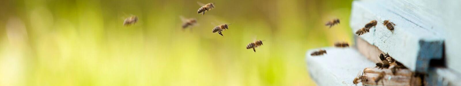 honey bees flying to beehive box where beeswax for the candles is produced